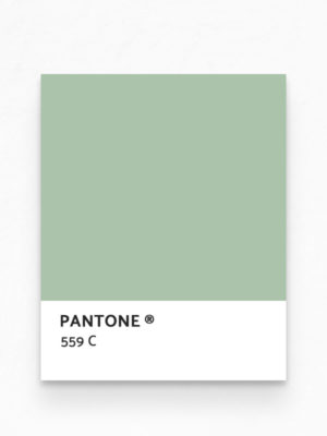 Hello Sticky - Shop - Peel &Amp; Stick Removable Wallpaper - Kids Wallpaper - Jurassic Jungle - Pantone View