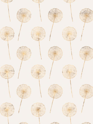 Hello Sticky - Shop - Peel &Amp; Stick Removable Wallpaper - Fruity &Amp; Floral Wallpaper - Whimsical Dandelion - Zoomed In View
